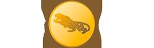 Jaguar Gruppen